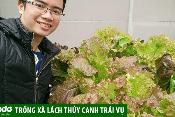 Lựa chọn ống nhựa thủy canh tốt nhất để trồng xà lách trái vụ
