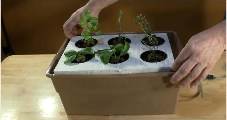 Số lượng cây bạn trồng phụ thuộc vào kích cỡ bể chứa và loại cây bạn muốn trồng.