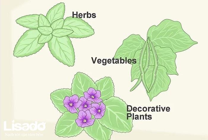 Chọn cây trồng thủy canh