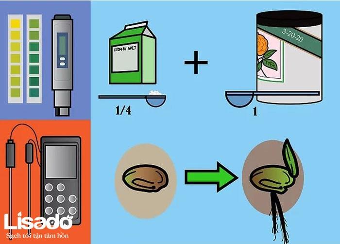 Cách bón cây bằng phân bón Maxsea trong một hệ thống thủy canh