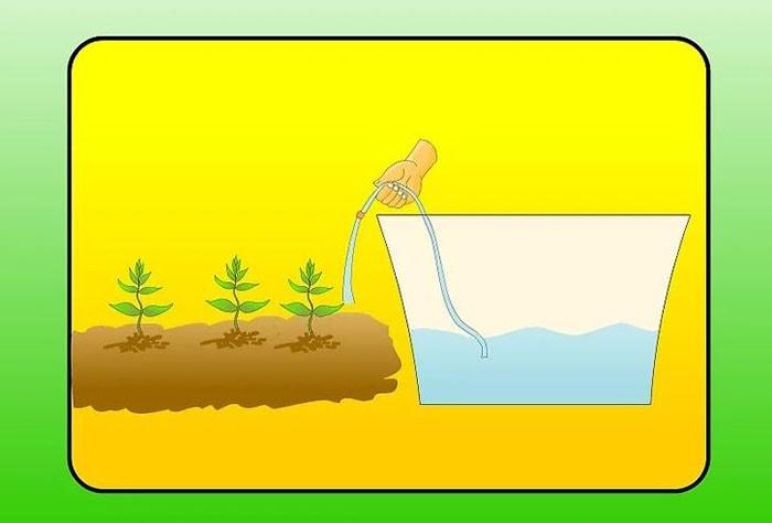 bạn có thể bón nó cho những cây trồng dưới đất