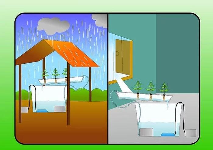 Nếu lựa chọn nuôi trồng trong nhà, bạn cần cung cấp ánh sáng phù hợp cho nhu cầu phát triển của cây