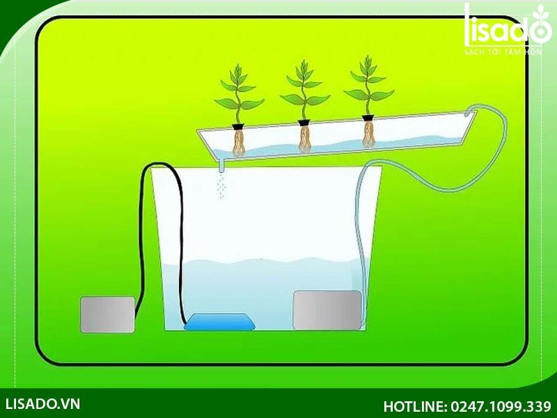 Phương pháp duy trì bể chứa dinh dưỡng thủy canh