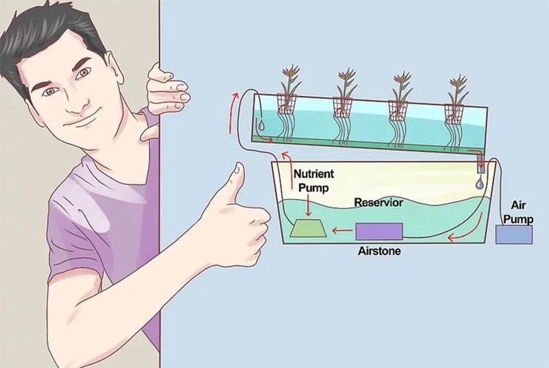 4 bước xây dựng hệ thống thủy canh tại nhà với chi phí thấp