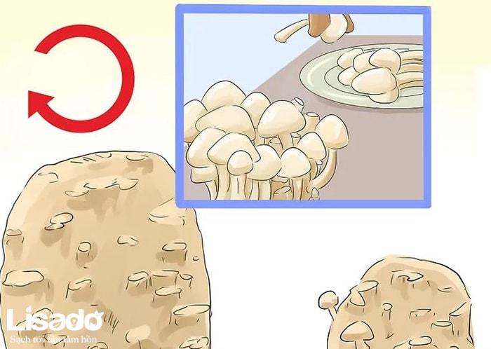 Hướng dẫn trồng nấm theo phương pháp thủy canh