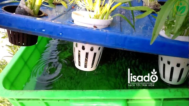 Thiết lập chế độ trồng rau thủy canh tĩnh