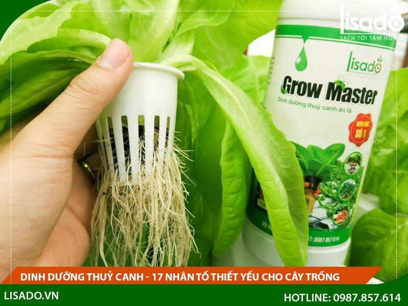 Dinh dưỡng thuỷ canh - 17 nhân tố thiết yếu cho cây trồng