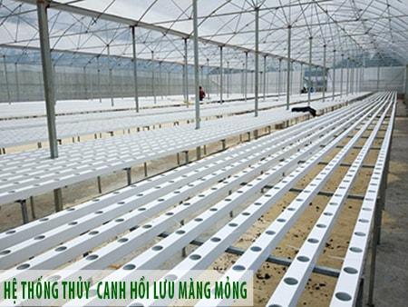 Thiết kế mô hình trồng rau thuỷ canh quy mô lớn năng suất cao