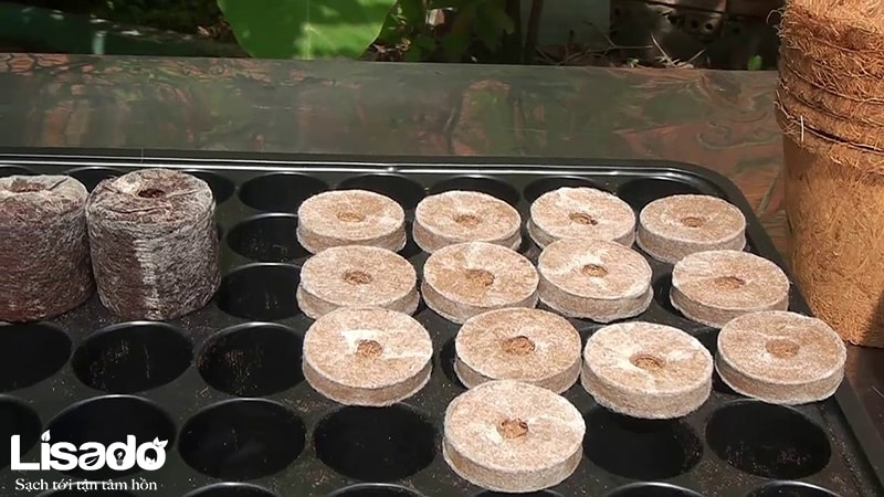 Viên nén xơ dừa - Viên nén ươm hạt trồng rau giá tốt nhất
