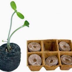 Cách trồng viên nén xơ dừa ươm hạt