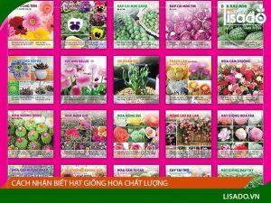 Cách nhận biết hạt giống hoa chất lượng