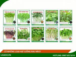 Có những loại hạt giống rau nào? Cách trồng các loại giống rau