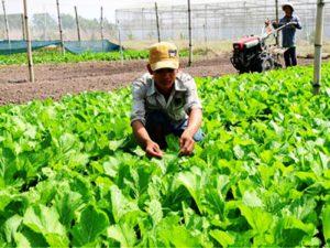 Quy trình gieo trồng hạt giống rau ăn lá đơn giản nhất