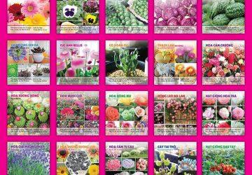 Nhận biết hạt giống hoa tốt như thế nào?