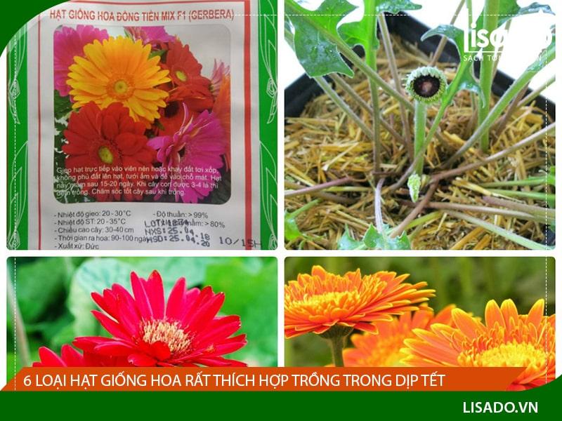 6 loại hạt giống hoa thích hợp trồng để chơi Tết