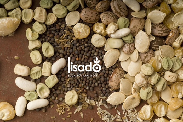 Các loại hạt giống được bán ở Lisado