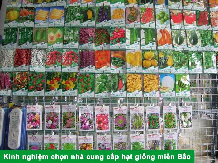 Kinh nghiệm chọn nhà cung cấp hạt giống miền Bắc
