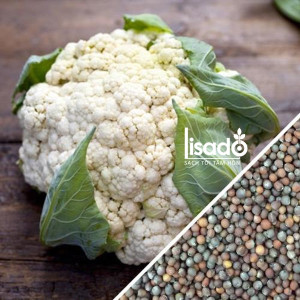 Hạt giống súp lơ thích hợp trồng trong mùa đông