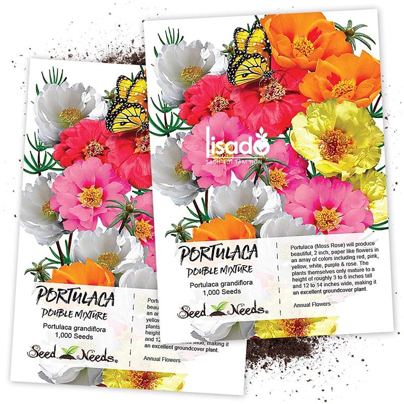 Hạt giống hoa mười giờ rất thích hợp trồng vào mùa xuân