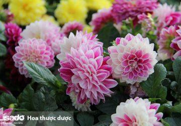 6 loại hạt giống hoa rất thích hợp trồng trong dịp Tết