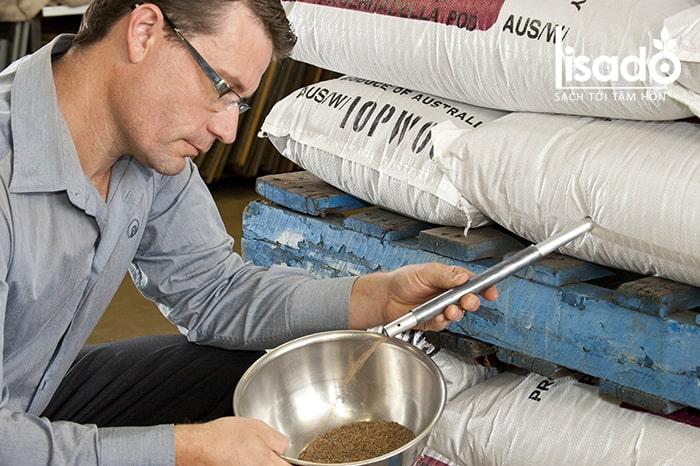 Kiểm tra trước chất lượng hạt giống