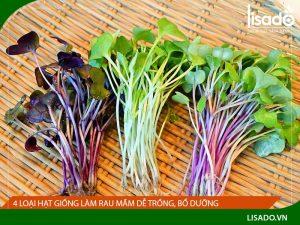 4 loại hạt giống làm rau mầm dễ trồng, bổ dưỡng