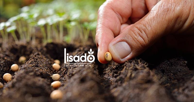 Hạt giống chất lượng tốt cho khả năng nảy mầm cao