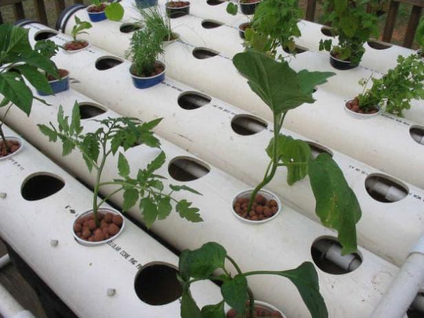 Theo dõi sự phát triển của cây trồng