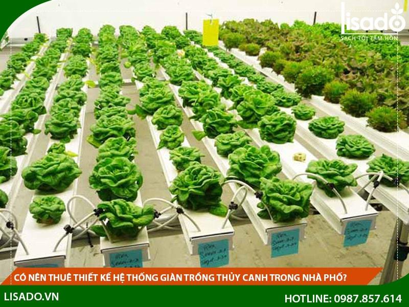 Có nên thuê thiết kế hệ thống giàn trồng thủy canh trong nhà phố?