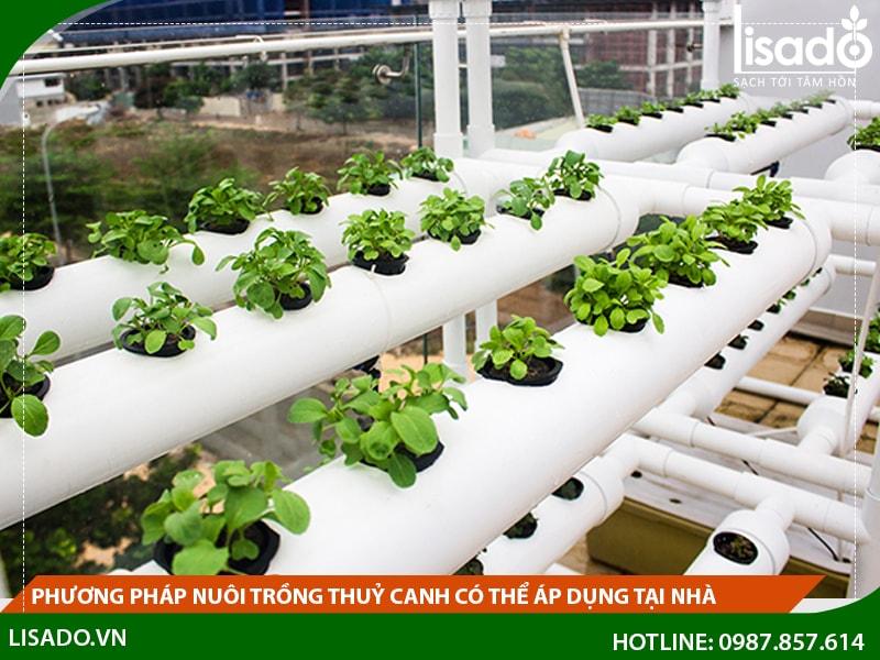 Phương pháp nuôi trồng thuỷ canh có thể áp dụng tại nhà