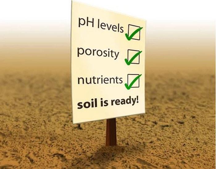 Kiểm tra đất trồng rau xà lách