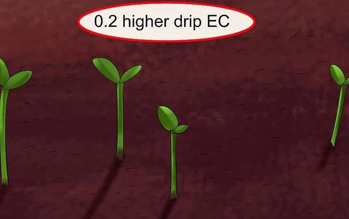 Sau khi trồng cây, thêm 35% Kali vào hỗn hợp phân bón