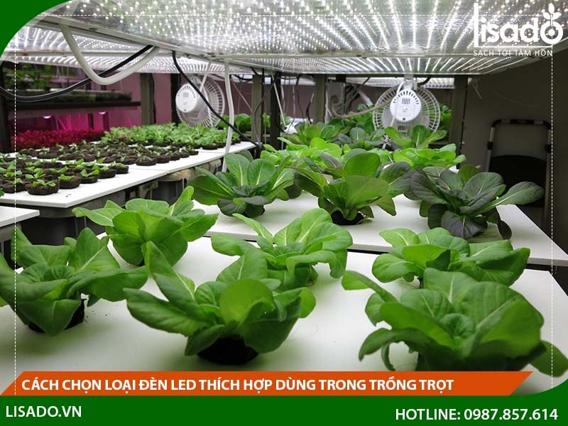 Cách chọn loại đèn Led thích hợp dùng trong trồng trọt