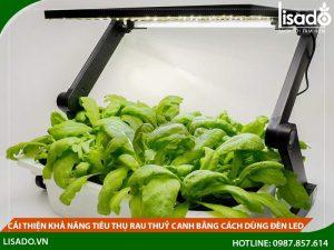 Cải thiện khả năng tiêu thụ rau thuỷ canh bằng cách sử dụng đèn Led