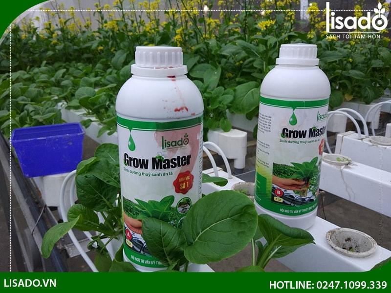 Sử dụng và pha dung dịch thuỷ canh Grow Master như thế nào?