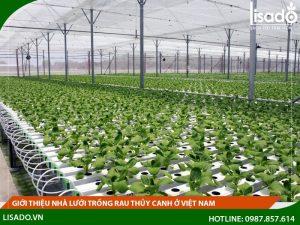 Giới thiệu nhà lưới trồng rau thủy canh ở Việt Nam