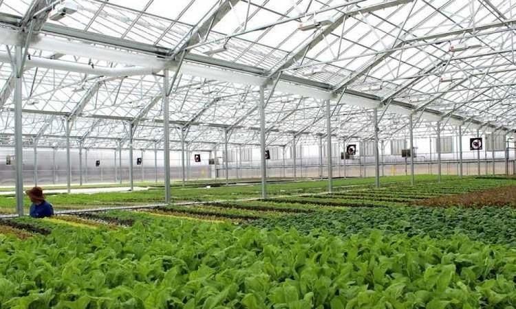 Mô hình nhà lưới trồng rau thủy canh