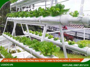 Giới thiệu hệ thống trồng rau thủy canh tại Canada