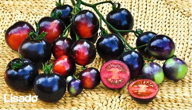 Cà chua lai tạo có màu sắc khác biệt so với giống thuần chủng
