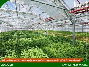Hệ thống thuỷ canh Nhật Bản trồng trong nhà lưới có ưu điểm gì?