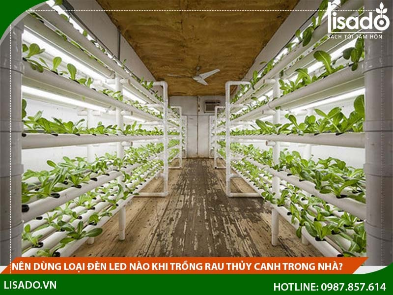 Nên dùng loại đèn led nào khi trồng rau thủy canh trong nhà?