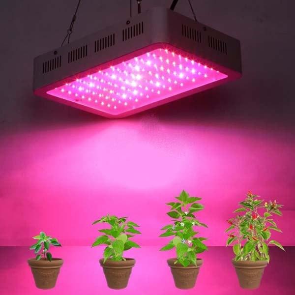 Đèn Led dùng trong trồng cây thủy canh