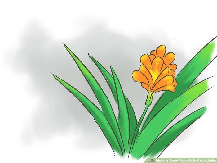 Xác định loại cây bạn sẽ trồng