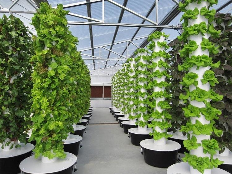 Phương pháp trồng cây thủy canh trụ đứng