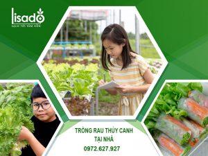 Dịch vụ thiết kế, trồng rau thủy canh tại nhà