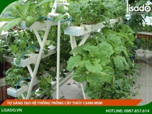 Tự sáng tạo hệ thống trồng cây thủy canh mini