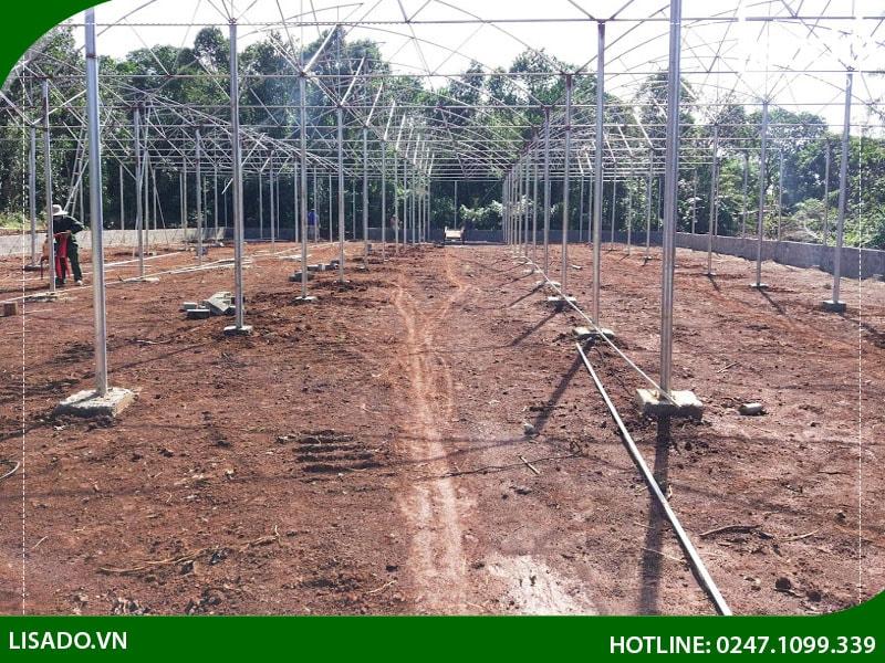 Diện tích gieo trồng là 1000m2 gồm 10 giàn dài 12m