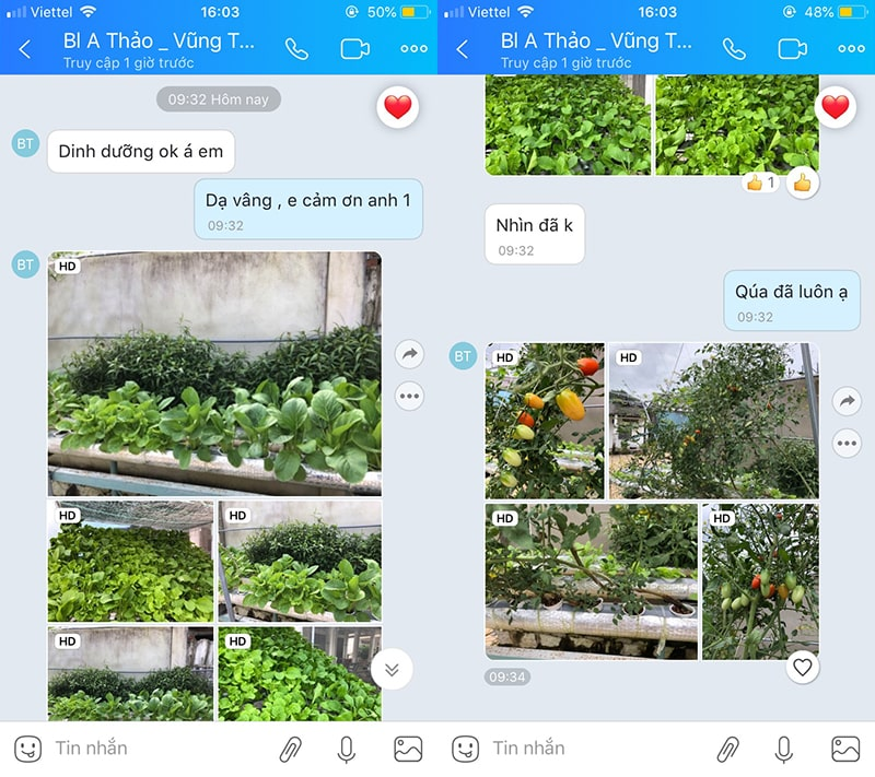 Feedback dung dịch thủy canh