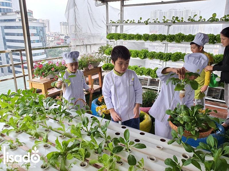 Dịch vụ trồng rau thủy canh tại nhà Lisado