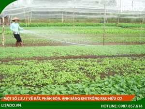 Một số lưu ý về đất, phân bón, ánh sáng khi trồng rau hữu cơ